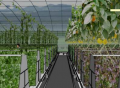 綠尚芽苗菜的加盟條件是什么?