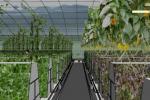 绿尚芽苗菜的加盟条件是什么?
