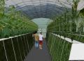 如何成為綠尚芽苗菜的加盟商?