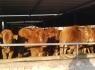 养牛的利润与成本