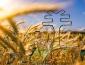 農民創業項目_農業賺錢小項目推薦