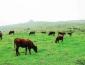 农村什么养殖业比较好做