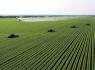 如何选择农业创业项目投资