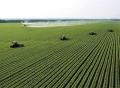 如何選擇農業創業項目投資