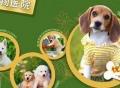 上海宠物店品牌连锁加盟哪家好