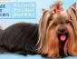 狗狗宠物店加盟多少钱