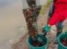 小龙虾养殖技术什地方可以学
