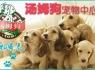 上海宠物店加盟多少钱