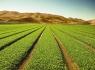 农业创业项目有哪些