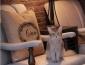 猫咪咖啡馆怎么加盟
