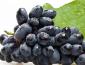 加盟花果山水果需要多少钱