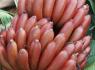 2020农村创业做火龙蕉种植就是好