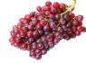 红宝石葡萄农村创业