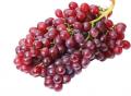紅寶石葡萄農村創業