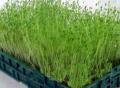 无土栽培代理如何,绿尚芽苗菜加盟广受好评
