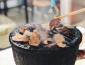 大槐树烤肉加盟的秘法,让烤肉与众不同