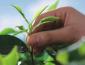 ETP植物精华加盟费及加盟条件