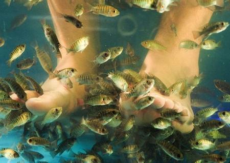 哪里可以学习开鱼疗馆的东西来大嘴鱼鱼疗馆_2
