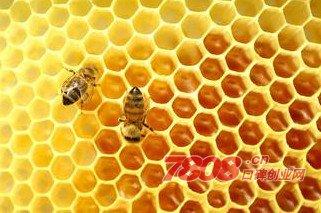 华兴蜂胶,蜂胶专卖店加盟,华兴蜂胶专卖店