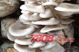平菇工厂化栽培哪家种植出来产量高,优菌派,优菌派蘑菇种植