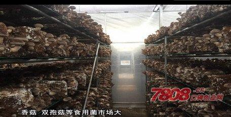 金针菇种植技术哪里能学,优菌派,优菌派蘑菇种植