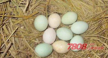 90后,大学生创业,土鸡蛋,成功案例