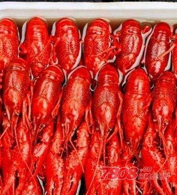 盱眙龙虾连锁美食餐厅可以加盟吗?