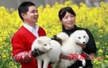 赵红芳,北极狐,成功案例