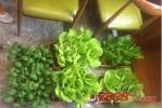 浙江老板在长沙创业开绿色餐厅 被误认蔬菜超市