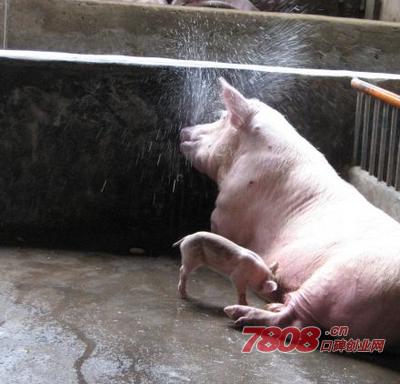 农村20头母猪养殖成本,养猪补贴政策2017标准